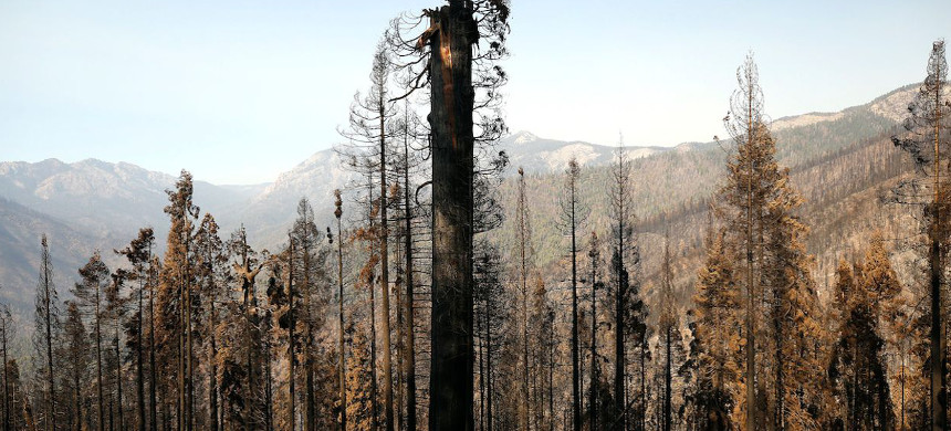 The Castle Fire burned through portions of giant sequoia groves on the western slopes of California's Sierra Nevada mountains, the only place on the planet where they naturally grow. (photo: Al Seib/LA Times)