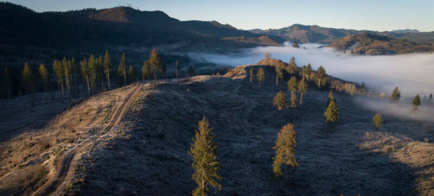 Clear-cut forests in western Oregon. (photo: Brooke Herbert/The Oregonian)