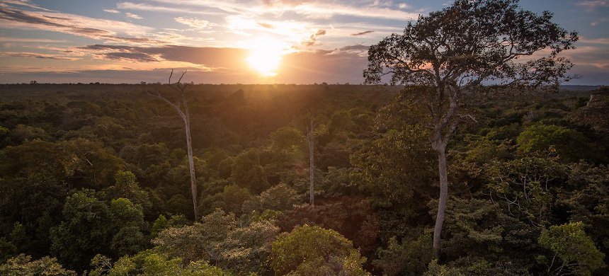 Amazonian forests in Bolivia. (photo: Oriol Massana & Adrià López-Baucells)