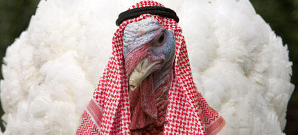 Beware the Sharia Turkey! (photo: Chuck Kennedy/MCT/Shutterstock)