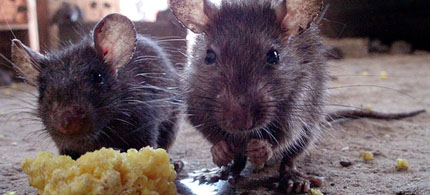 ALEC representatives say that kids eating rat poison is an 'acceptable risk', 12/07/11. (photo: matthieu-aubry/flickr)