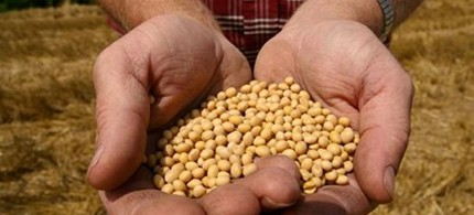 A farmer holding Monsanto's Roundup Ready Soy Bean seeds at his family farm in Bunceton, Mo., 12/14/09. (photo: AP)