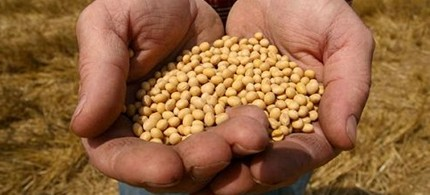 New GM crops, like these Monsanto-made soybean seeds, are getting an added boost through the approval process. (photo: GMOBeat)