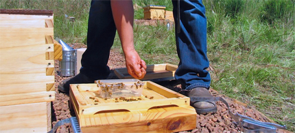 Farmer feeds bees sugar syrup. (photo: Milkwood: permaculture farming and living)