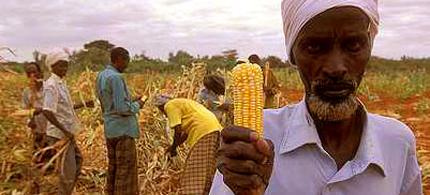 Kenyan farmers gathering corn. (photo: Curt Camemark)