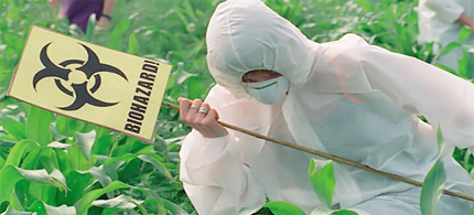 A protester destroys GM trial crops near Dorset in 2000. (photograph: Simon Chapman)