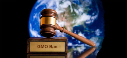 Congress is attempting to overturn court bans on some GM crops. (image: Time Magazine)