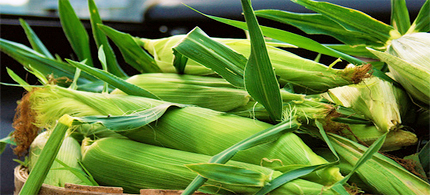 Walmart is filling shelves with unlabeled Monsanto GMO corn. (photo: PepOmint/flickr)