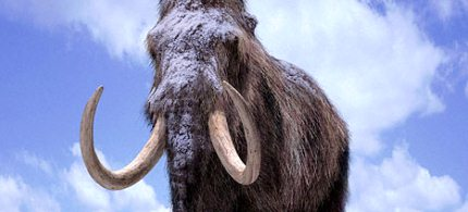 Woolly mammoths faced extinction between 4,000 and 10,000 years ago. (photo: Unknown)