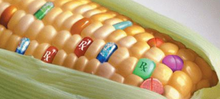 Mexico may authorize GMO corn. (photo: Natural Society)