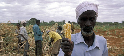 Kenyan farmers have long opposed GMO corn. (photo: Reuters)