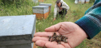 017798-bees-dying-083015.jpg